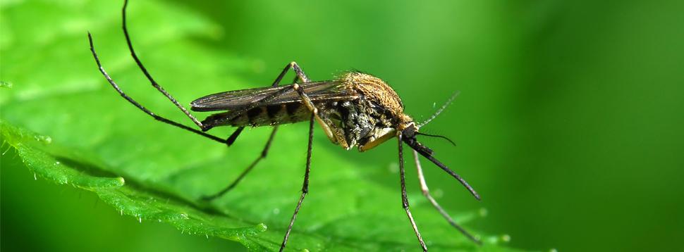 Disinfestazione insetti striscianti e volanti